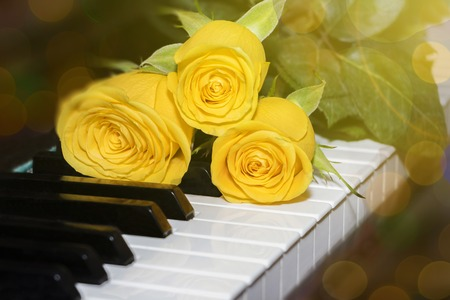 Three bright yellow roses lie on the piano keyboard.