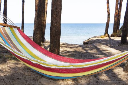 Hammock on the beach at sunset in the shade between the pines