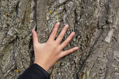 Hand on the background of tree bark.