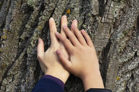 Two hands on a background of tree bark. Stockfoto