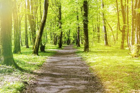 forest path on a Sunny summer day, young forest