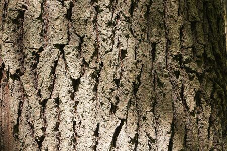 the bark of an old tree. The relief of the crust, texture of old bark.