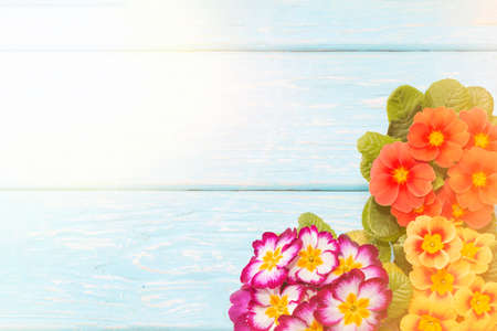 primroses are the first flowers that bloom in early spring, on a wooden background and a place for the inscription. gift. Mothers day. Standard-Bild