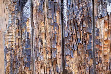 The background is made of dried and rotten wooden planks