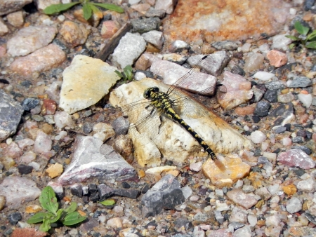 sun bathing: A crab sun bathing on a rock near the water