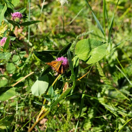 A small butterfly with beautiful wings sits on a flower. The photo was taken in the city boron of Chelyabinsk, Russia.