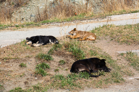 wasteland: Three homeless mongrel sleeping at wasteland. Two black and one ginger dogs are laying apart. Stock Photo