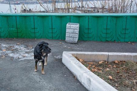 mongrel: Black mongrel on the viewing platform outdoor Stock Photo