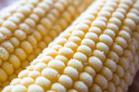 Grain of fresh sweet corn covered by hoar. Closeup. Stock Photo
