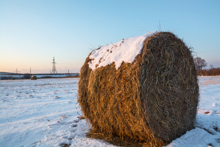 Haystack on the field covered by snow. Stock Photo