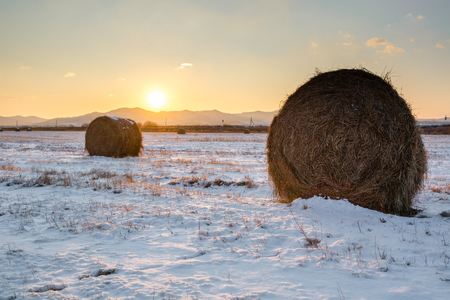 Rolls of hay on the field covered by snow. Rural nature winter landscape in morning.