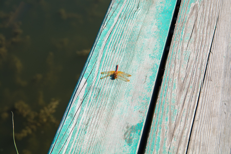 Orange dragonfly sitting on a wooden plank. Insect near the water. Reklamní fotografie