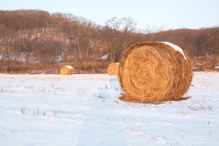 Haystack on the field covered by snow. Rural nature winter landscape in morning. Stock Photo
