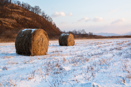 Haystack on the field covered by snow. Rural nature winter landscape in morning. Archivio Fotografico