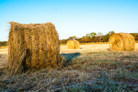 Rolls of haystacks on the field. Warm morning landscape with a rural. Reklamní fotografie