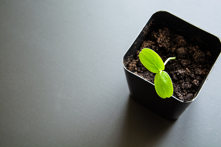 Green sprout in a ?ontainer for seedlings. Minimalistic image with place for caption.