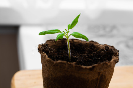 Green sprout in the small container. Peat cup for seedlings. Reklamní fotografie