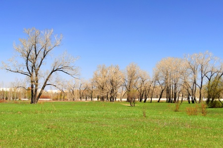 Lifeless trees on green field and blue sky above photo