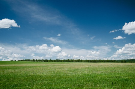 flowers field: Simple summer landscape with green grass and blue sky