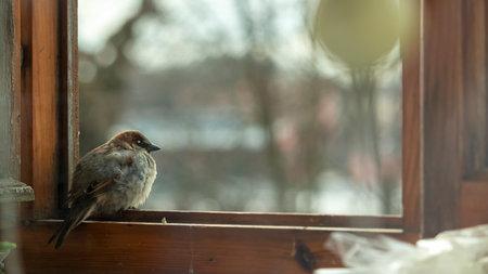 little sparrow sits on the balcony window,