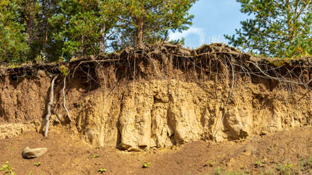 trees on a steep crumbling clay sand beach Foto de archivo