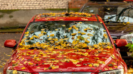 fallen yellow leaves on the windshield of a red car