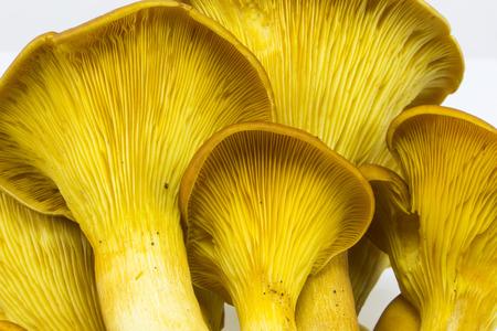 gills: Orange jack-o-lantern mushroom Omphalotus olearius gills Stock Photo