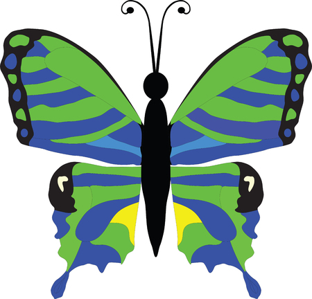 arthropod: Portrait of a beautiful black, green, blue and yellow butterfly, vector illustration Illustration