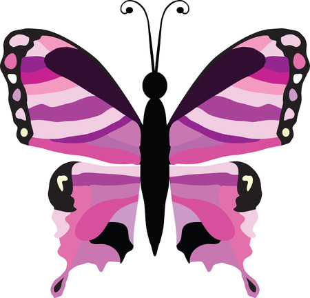 butterfly isolated: Butterfly vector illustration isolated on white background