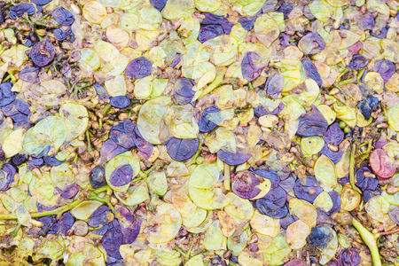 winepress: Squeezed grapes. Scrap grapes from which the wine was extracted Stock Photo