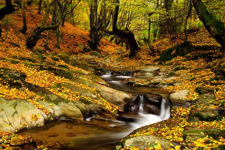naranja arbol: Río en hermosos colores de otoño con hojas Foto de archivo