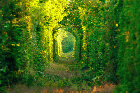 natural arch: Natural tunnel of love formed by trees in Romania. Railroad removed. Stock Photo