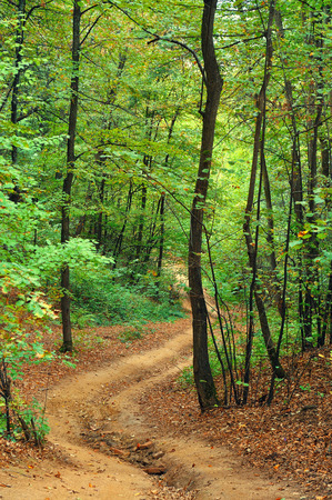 Path in the forest