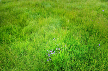 Mountain grass with purple flowers