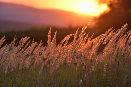 Steppe grass at sunset against the sun Imagens