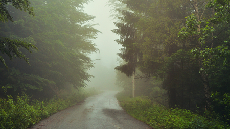 Summer forest road covered by fog