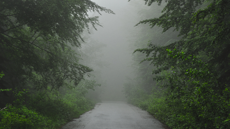 Summer forest road covered by fog 写真素材