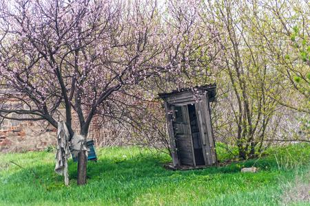 Rural toilet against the spring wood. Rustic toilet outside. Standard-Bild - 121482205