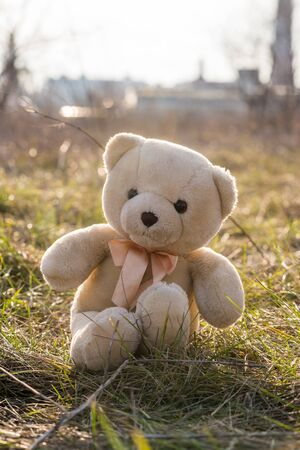 A teddy bear sits on dry grass. A children's toy. Standard-Bild