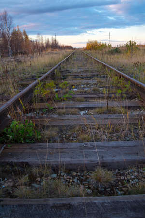 An old abandoned grassy railway