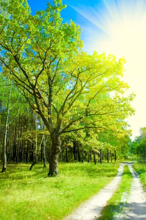 forest road Stok Fotoğraf