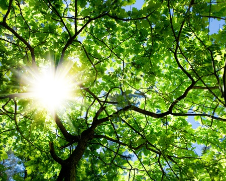 crone: crone of the tree and sun Stock Photo