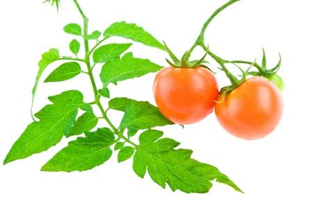 tomato with foliage Stok Fotoğraf - 11486591