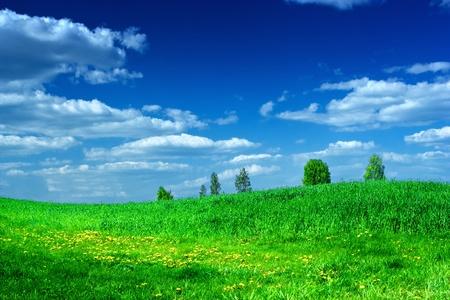 아름다움 푸른 하늘과 녹색 풀밭