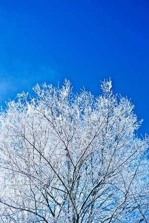 crone: image of crone snowed tree with copyspace Stock Photo