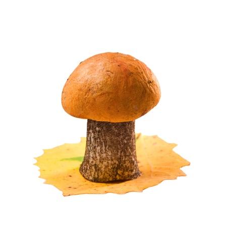 fungous: orange-cup boletus isolated Stock Photo