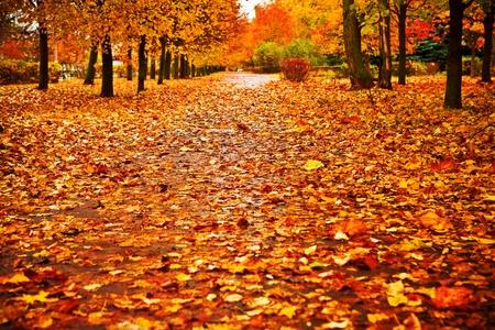 red autumn park Stok Fotoğraf