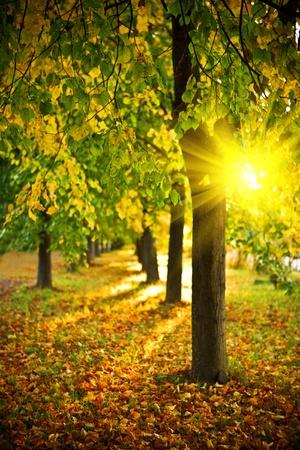 autumn scene: yelow evening alley