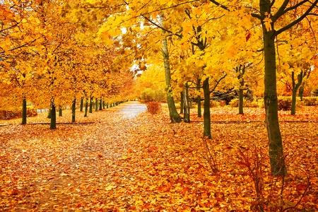 the dry leaves: Orange Park Foto de archivo
