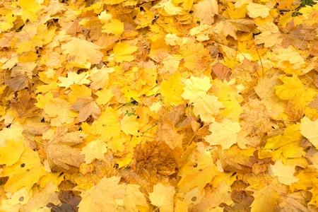 Autumn carpet photo